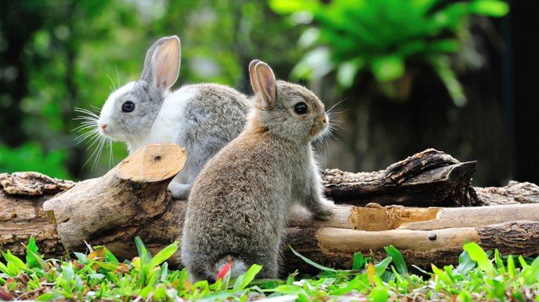 rabbits-crazy-march-1a.jpg